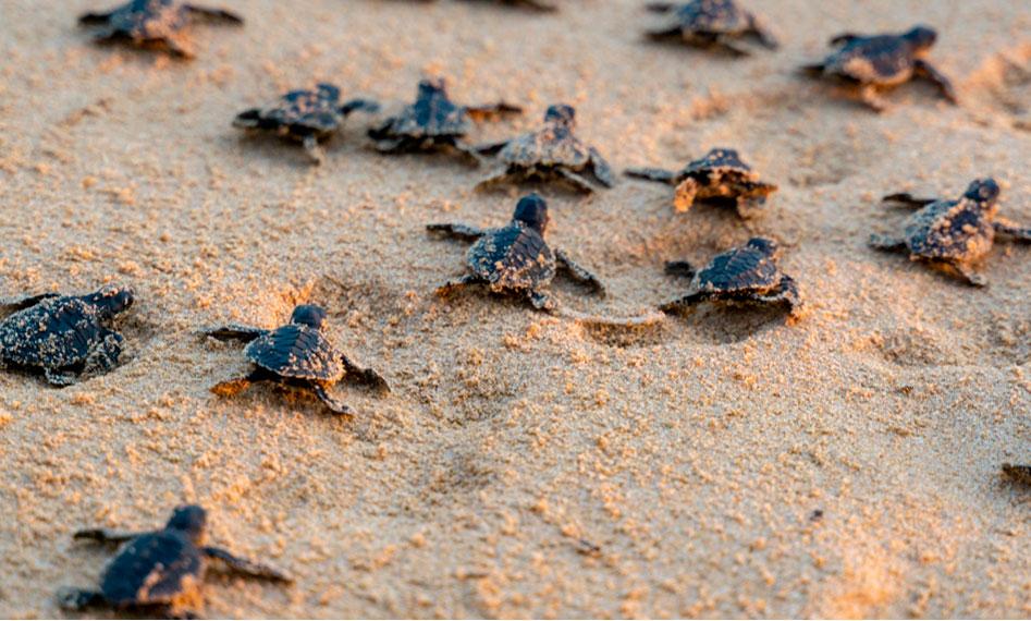 Lee más sobre el artículo Conoce más sobre las tortugas marinas