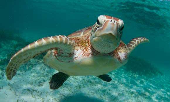 Lee más sobre el artículo ¿Te llamó la atención la tortuga marina como imagen de NCG?